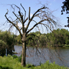Jigsaw: Dry Tree