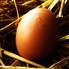 Jigsaw: Egg