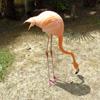 Jigsaw: Flamingo 2