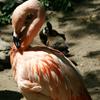 Jigsaw: Flamingo
