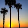 Jigsaw: Florida Sunrise