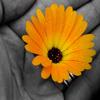 Jigsaw: Flower in Hand