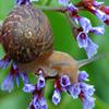Jigsaw: Flower Snail
