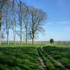Jigsaw: Grassy Fields