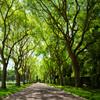 Jigsaw: Green Trees