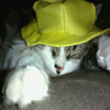 Jigsaw: Hat Cat