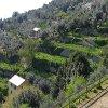 Jigsaw: Hills Terrace