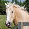 Jigsaw: Horse Portrait