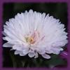 Jigsaw: Сhrysanthemum