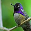 Jigsaw: Hummingbird