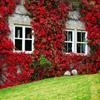 Jigsaw: Ivy House