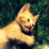 Jigsaw: Kitten Playing
