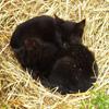 Jigsaw: Kittens Sleeping