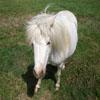 Jigsaw: Little Pony