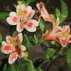 Jigsaw: New flowers
