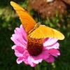 Jigsaw: Orange Butterfly