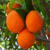 Jigsaw: Oranges