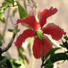 Jigsaw: Pale Red Flower