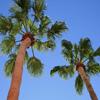 Jigsaw: Palm Trees