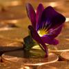 Jigsaw: Penny Flower