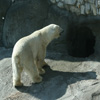 Jigsaw: Polar Bear 3