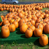 Jigsaw: Pumpkin Market