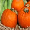 Jigsaw: Pumpkins