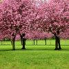 Jigsaw: Sakura Trees
