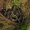 Jigsaw: Snake In The Grass
