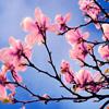 Jigsaw: Spring Tree