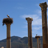 Jigsaw: Stork Column