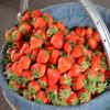 Jigsaw: Strawberry Basket