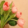 Jigsaw: Tulips