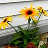 Jigsaw: Yellow Flower 2
