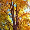 Jigsaw: Yellow Leaves