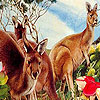 Kangaroos in the garden puzzle