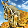 Kangaroos in the mountains slide puzzle