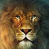 King lion puzzle