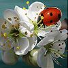 Ladybug slide puzzle
