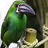 Large beak puzzle