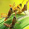 Leaf and grasshopper slide puzzle