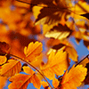 Leaves in Fall Jigsaw Puzzle