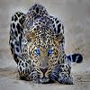 Leopard Slide Puzzle
