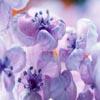 Lilacs Sliding