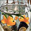 Little aquarium slide puzzle