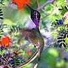 Little garden bird slide puzzle