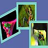 Little green acrobat frogs puzzle