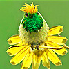 Little green head bird puzzle