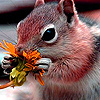 Little ground squirrel puzzle