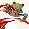 Little naughty frog slide puzzle